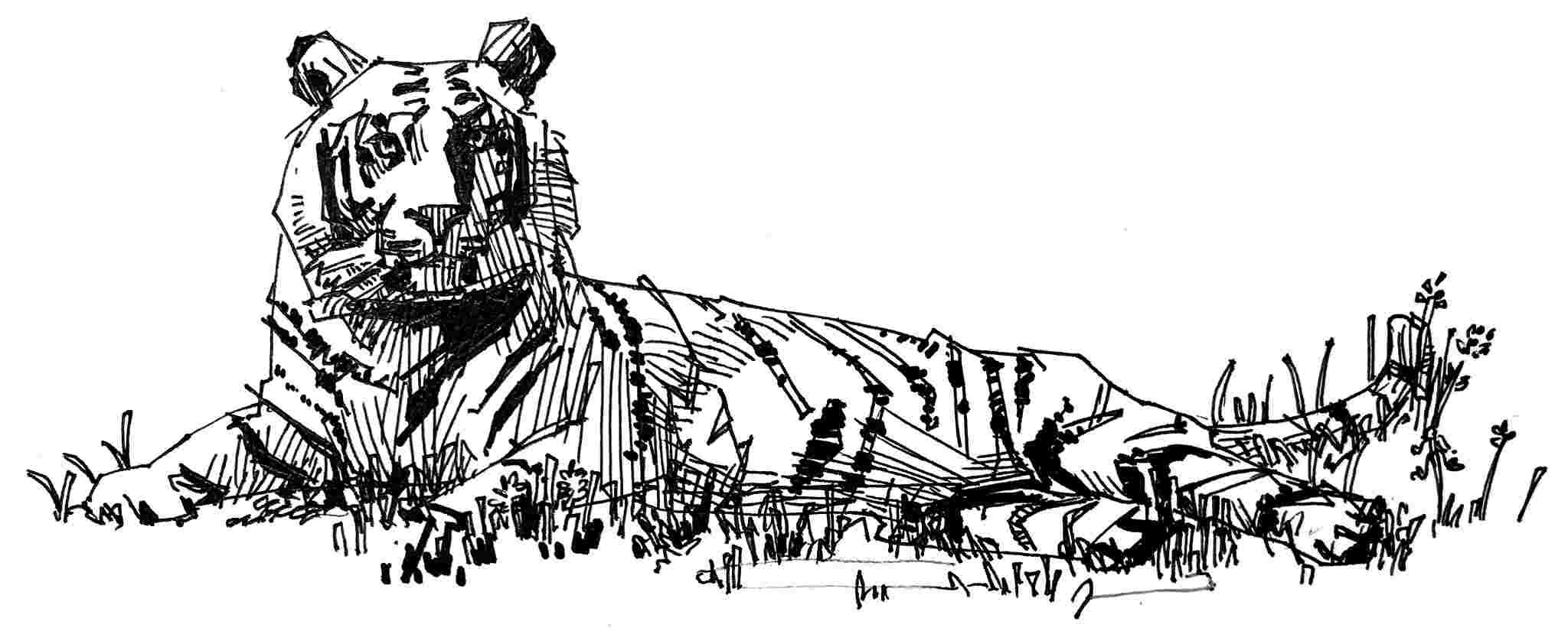 Schwarz-weiß Zeichnung liegender Tiger - bildlich für Markenrecht