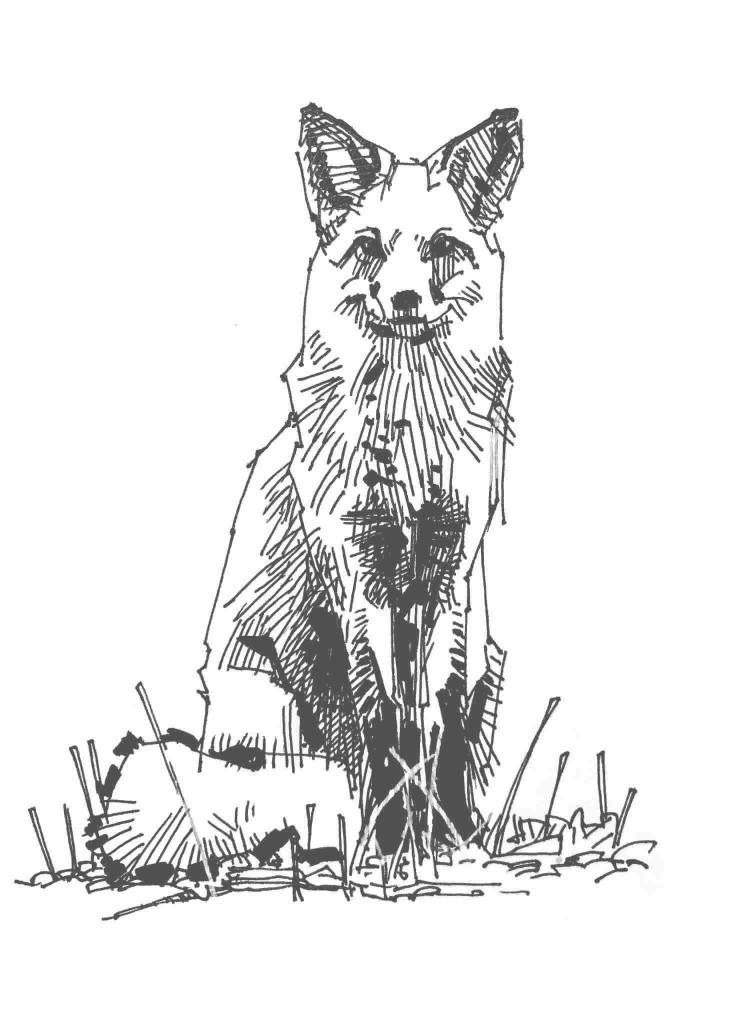 Schwarz-weiß Zeichnung aufrecht sitzender Fuchs - bildlich für Urheberrecht